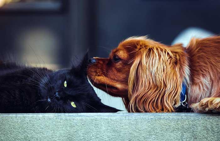Legislación de Animales Domésticos